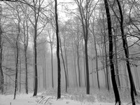 Endless Forest (Taunus)